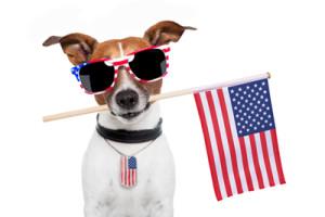 fourth-of-july-dog-