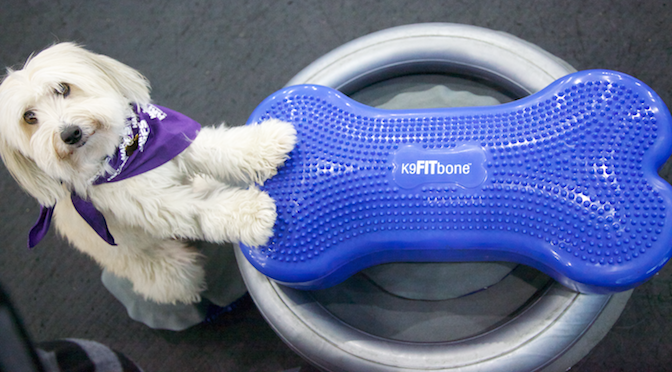 FitPAWS K9FITBone Review