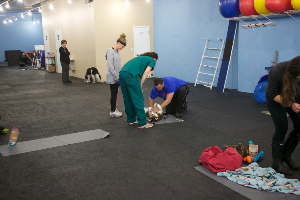Canine_CPR_FirstAid10