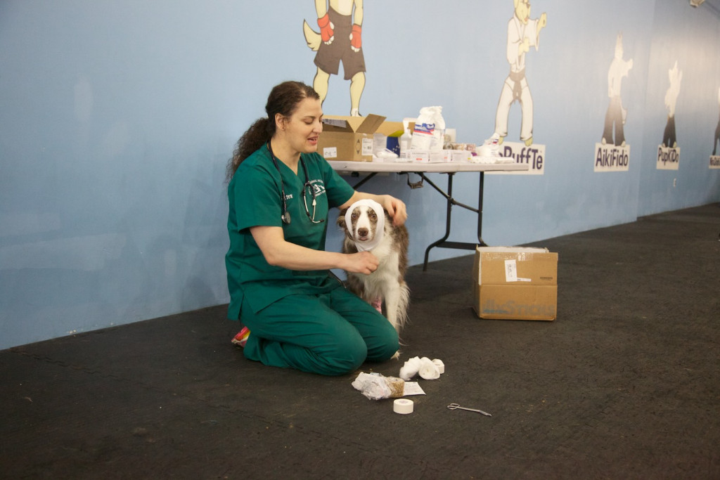 Canine_CPR_FirstAid20