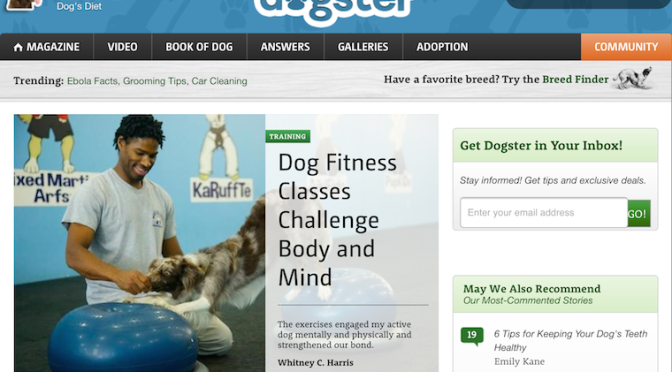 The Martial ARFS™ on Dogster.com