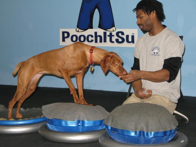 Martial-Arfs-Jeris-Pugh-tests-dog-balance
